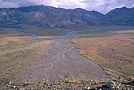 Waterways from the glacier melt cuts across the fall colors of the tundra, Denali, Alaska, photograph by Brent VanFossen
