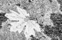 Underexposure of leaf