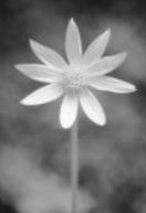 flower11sm.jpg