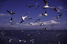 Seagulls in flight behind a boat on the Kinneret, Galilee, Israel, photograph by Lorelle VanFossen