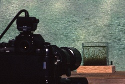 Working with a small home made aquarium for photographing small shrimp, photograph by Lorelle VanFossen