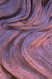 Driftwood, photograph by Brent VanFossen