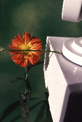 Studio setup for photographing the water drops and flower, photograph by Brent VanFossen
