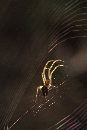 Spider on web in sunset light, photograph by Brent VanFossen