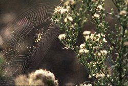 Spider in web near flowers, photograph by Brent VanFossen