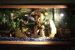 Fish Tank front view, photograph by Lorelle