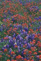 Spring is great for wildflowers in Texas, photo by Brent VanFossen
