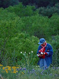 Ramona identifies the wildflowers in Texas from a guide book, photo by daughter, Lorelle VanFossen