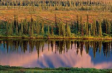 Example of the closeup view of trees reflected in a lake in Alaska