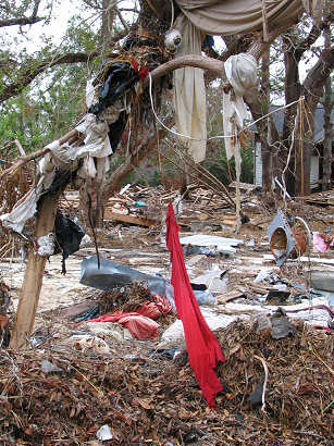 Hurricane Art - debris hanging from trees creates artistic sculpture