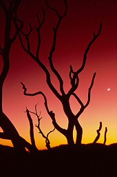 Trees silhouetted against sunset, California, photograph copyright Brent VanFossen, VanFossen Productions