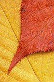 Two leaves overlap, photograph by Brent VanFossen