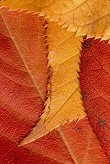 Four overlapping leaves, photograph by Brent VanFossen