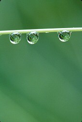 Water droplets on grasses, photograph copyrighted Brent VanFossen