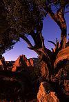 Garden of the Gods, Colorado Springs, Colorado, Photo by Brent VanFossen