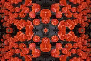 Red Tulips PhotoQuilt II, photo by Brent VanFossen