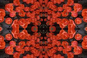 Red Tulips PhotoQuilt III, photo by Brent VanFossen