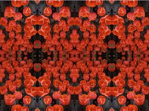 Red Tulips PhotoQuilt IV, photo by Brent VanFossen