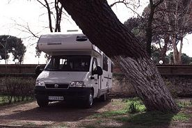 We were able to move our rented Class C motorhome around this tree in the campground in Spain, photograph by Lorelle VanFossen
