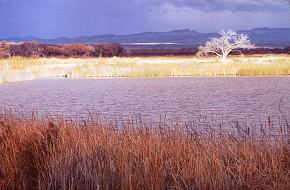 Scenic of waterways at Bosque del Apache. Photo By Brent VanFossen