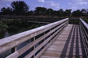 A boardwalk runs through the wetlands allowing easy viewing of the wildlife and plants, photo by Brent VanFossen