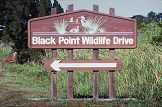 Black Point Wildlife Drive is the 6 mile auto loup at Merritt Island, photo by Brent VanFosssen