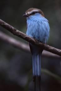 birdbluea