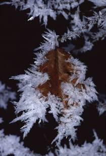 frostleafflasha