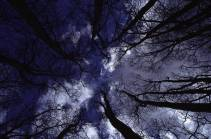 treesintocloudsa