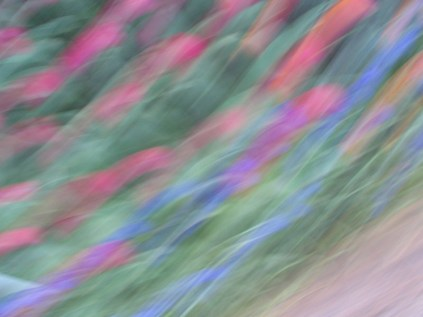 tulip blur circles 12 lorelle vanfossen