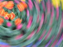 tulip blur circles 14 lorelle vanfossen