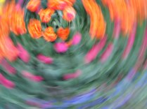 tulip blur circles 16 lorelle vanfossen