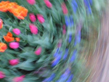 tulip blur circles 17 lorelle vanfossen