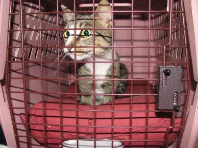 DJ, just out of the tree in the carrier by Lorelle VanFossen
