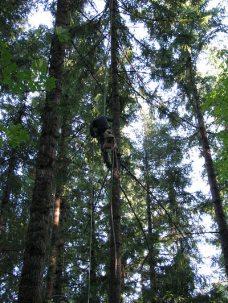 dj tree - climber heading down