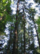 dj tree - climber up 5