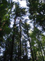 dj tree - just caught tall view