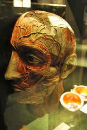 exhibition, mindgap norway, brain, exhibition, weekly photo challenge, 2012, life, love, travel, adventure