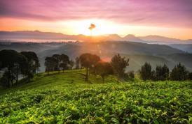 Landscape Photography: Type, Tips & Tricks 4