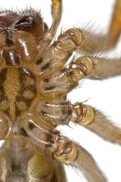 SpiderModelingReference_04