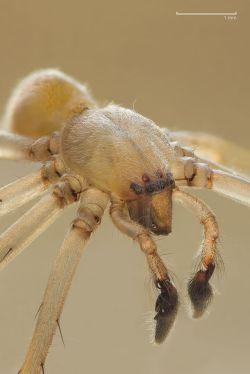 SpiderModelingReference_05
