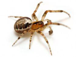SpiderModelingReference_22