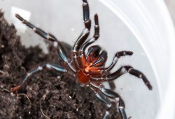 SpiderModelingReference_18