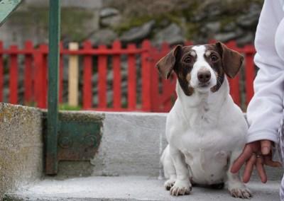 2015-04 - Commissioned Pet Portrait Painting - Sophie - original image