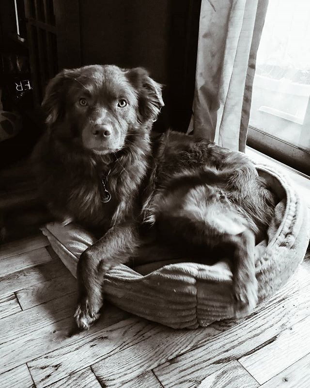 This is our youngest dog Brew (aka: Bort). This image shows that the camera can fool the eye into thinking he is a regal creature.