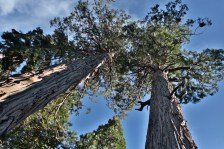 CameronFrostPhotography_Tahoe08