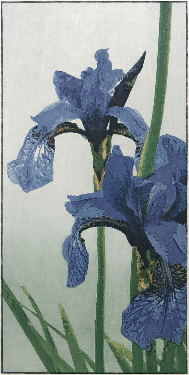 Irises limited edition woodblock print by Claire Cameron-Smith
