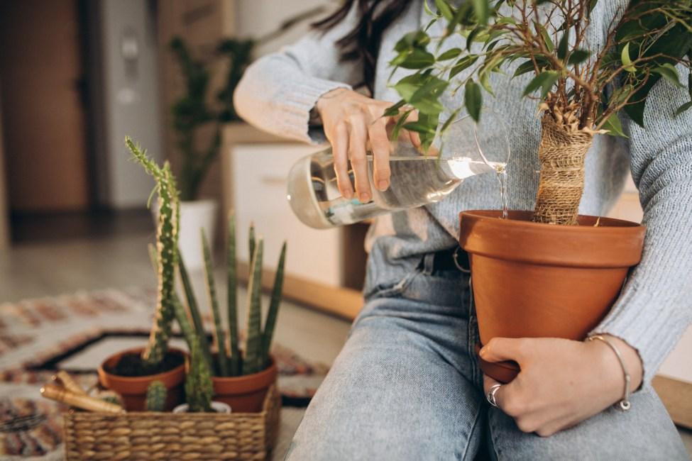 plantas camesa