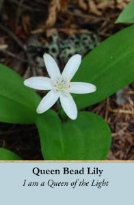 queen bead lily copy