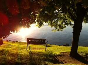 Bench Under Trees with Sun at Vintage Lake 2016